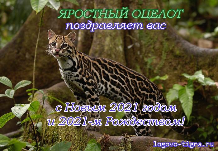 Изображение: http://antigun.savesoul.ru/misc/ny/ny2021.png